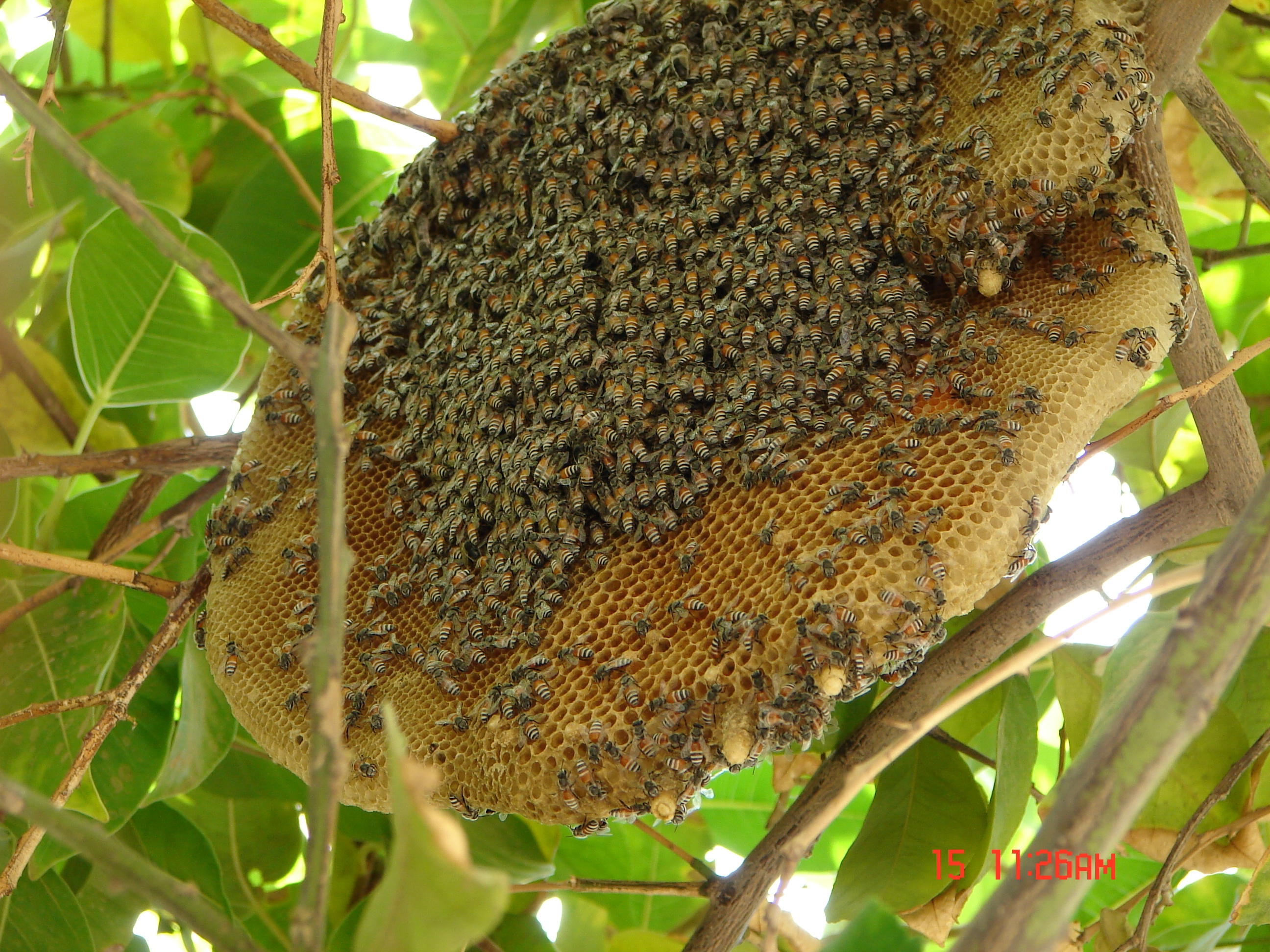 Image result for honey bee hive