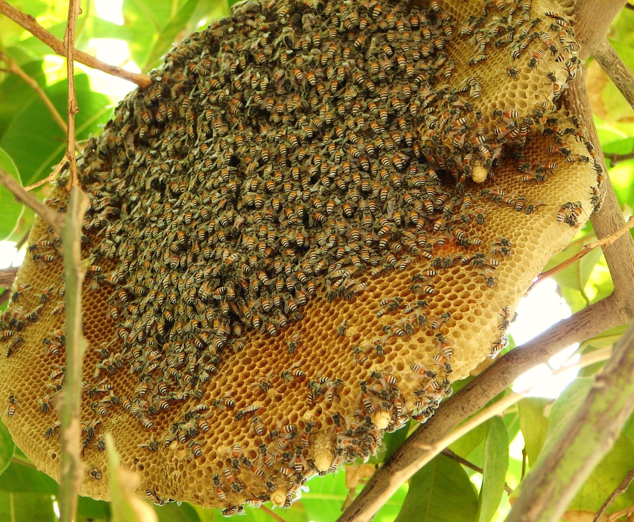 ... bees tries ...
