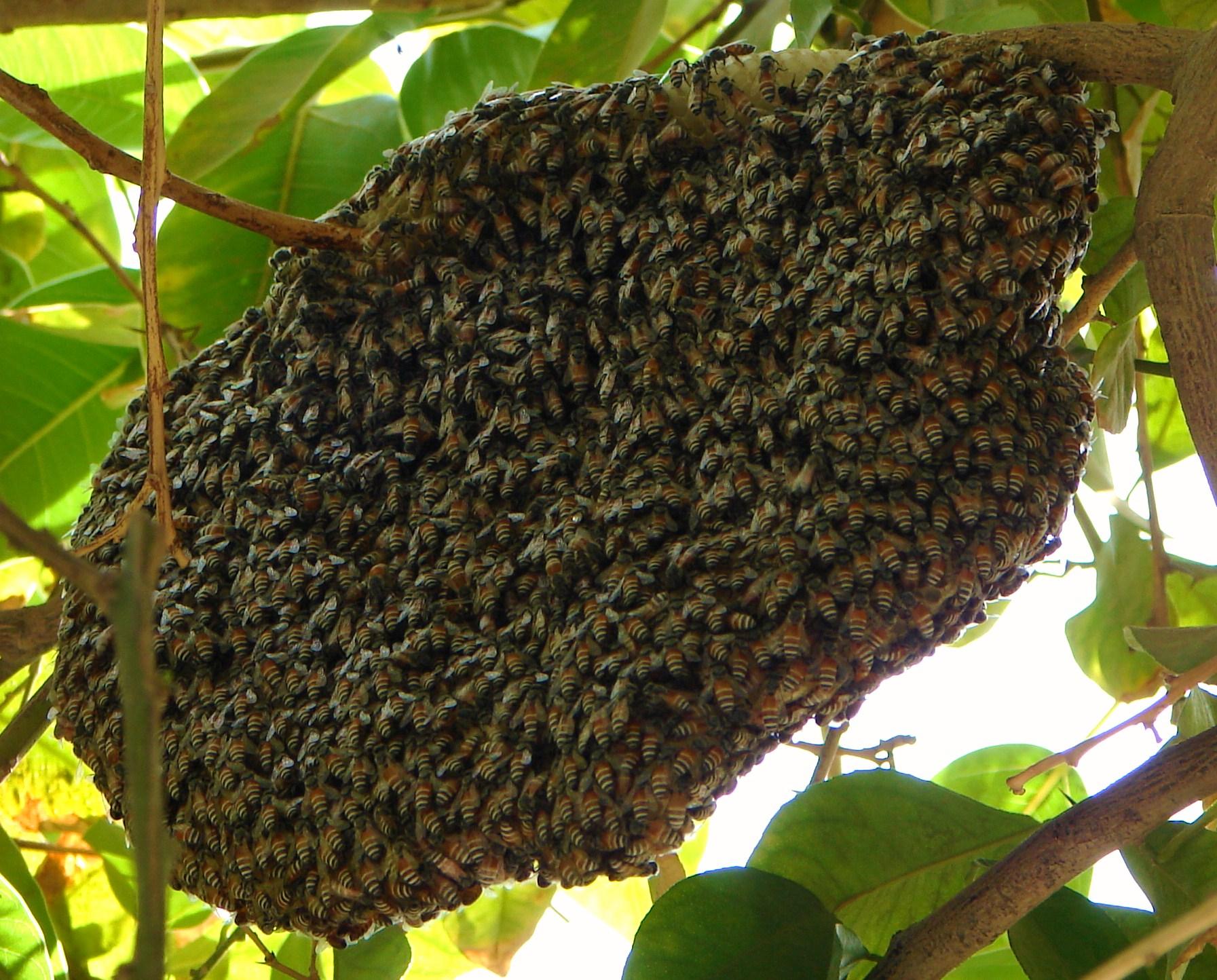 Beehive - photo#3