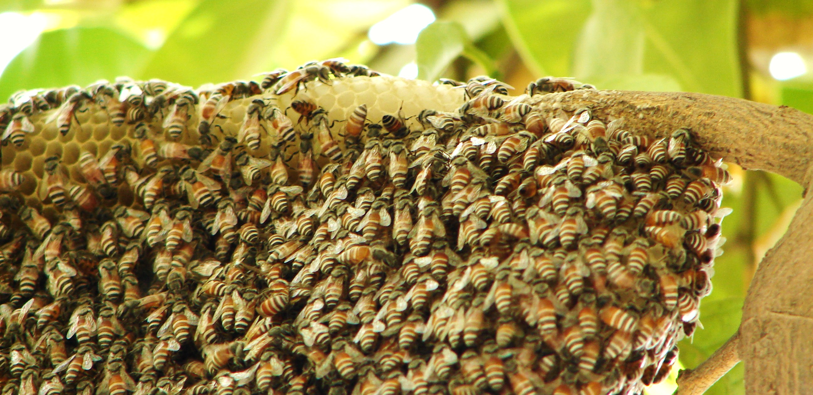Beehive - photo#24